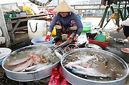 A market  place in the town of Sa Dec along the Mekong River in Vietnam<br /> <br />  photo by Dennis Brack