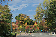 Autumn colors along the east drive near 96th street in Central Park.