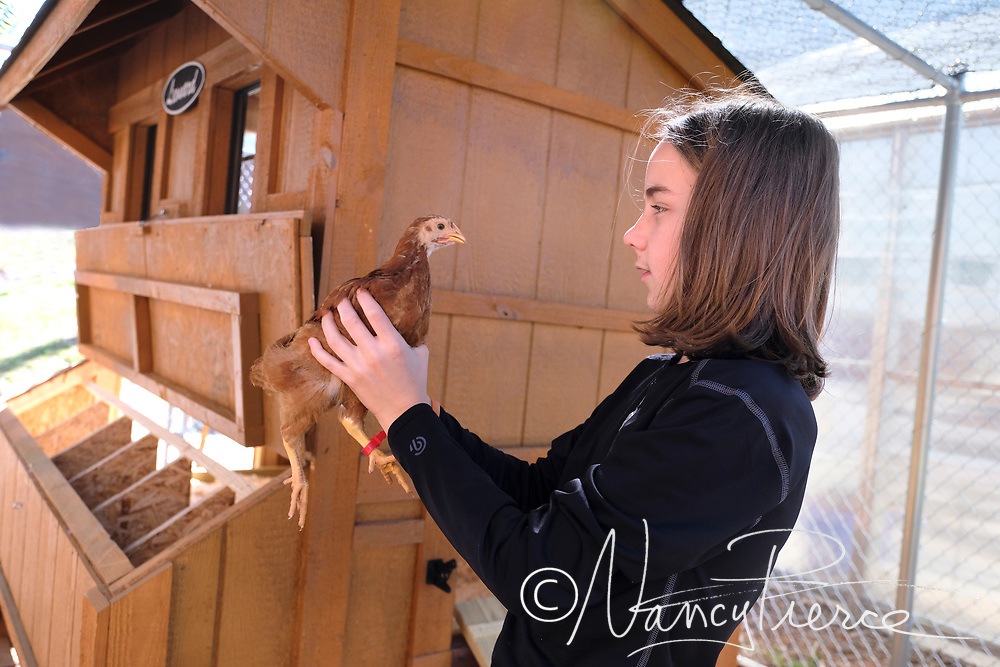 These pictures were taken at JT Williams Secondary Montessori School. They raise chickens as part of the Agricultural Science pathway, which is required for all Montessori students.  Teacher is Katherine Pair (not shown)