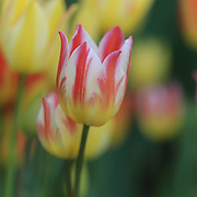 """One Among many""<br />