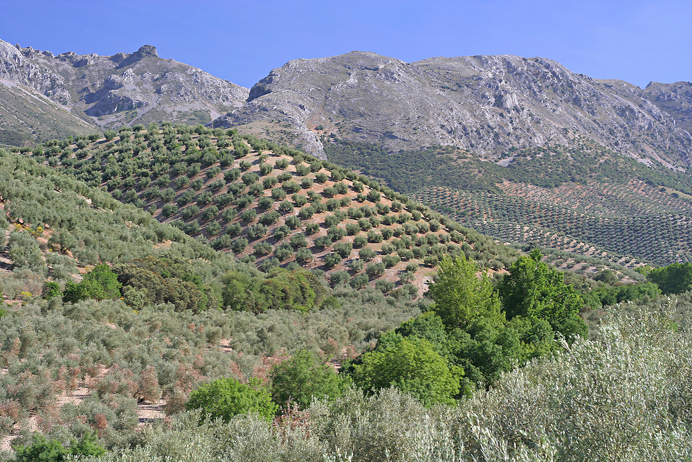Mountains, olive groves and countryside in the Sierra Subbetica, Andalucia, Spain.