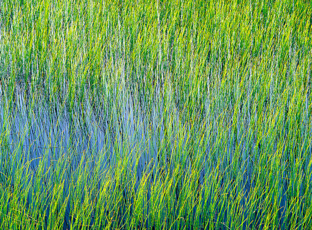 reeds natural texture interlacing green reed blue water meadow pond pool