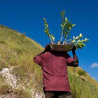 MCC mountain top reforestation program. Desarmes, Haiti. 10/8/09 Photo by Ben Depp