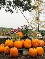 Moulton Farm's annual great pumpkin drop.  (Karen Bobotas/for the Laconia Daily Sun)