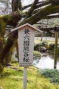 Cherry tree in a Japanese Garden, Tokyo, Japan