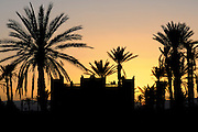 Some palms in the twilight with the sunset and backlight. Dades gorge. Morocco. Africa.