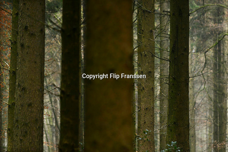 Nederland, Berg en Dal, Groesbeek, UbbergenDoor de bomen het bos niet meer zien. Het bos wordt door veel mensen gebruikt als plek voor recreatie. het Rijk van Nijmegen kent een gevarieerd landschap en is rijk aan bossen.FOTO: FLIP FRANSSEN