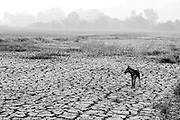 The Mekong Delta region in Vietnam, among many other regions of the country, are experiencing the most severe drought in nearly a century, according to the Vietnamese government. Images made in Ben Tre Province, April 26-28, 2016.