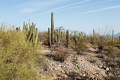 Organ Pipe Cactus National Monument, Arizona, USA