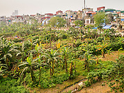02 APRIL 2012 - HANOI, VIETNAM: Hanoi as seen from the Long Bien Railroad Bridge, with bananas growing on the banks of the Red River.   PHOTO BY JACK KURTZ
