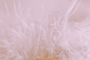 macro photography delicate pale pink feather texture
