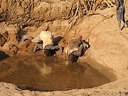 Hadza men drinking water from a muddy almost dry waterhole. Hadza are a small tribe of hunter gatherers AKA Hadzabe Tribe. Photographed at Lake Eyasi, Tanzania