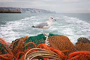 A seagull sits on the nets hitching a ride near Folkestone Harbour. during a fishing trip on the  boat Valentine (FE20), Hythe Bay, the English Channel, United Kingdom.  (photo by Andrew Aitchison / In pictures via Getty Images)