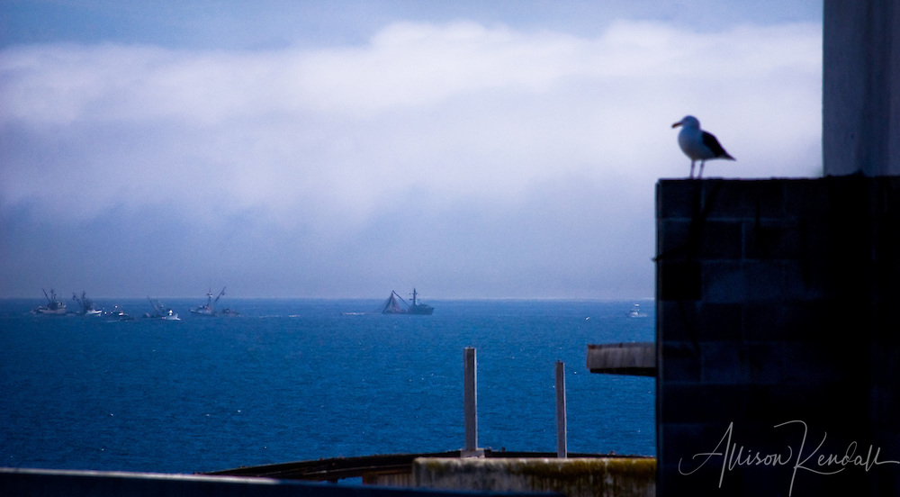 Fishing boats busily work in the bay as the afternoon fog approaches, framed by Cannery Row and watched by a seagull