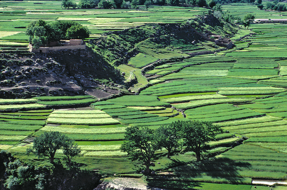 Various grain are cultivated on the terraces in Chitral, Khyber Pakhtunkhwa, Pakistan.