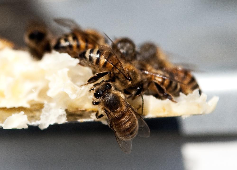 Tennessee Honey