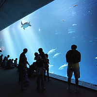 "Visitors tour the ""Open Seas Exhibit"" at the Monterey Bay Aquarium, which is located on Cannery Row in Monterey, California, on Friday July 13, 2012.(AP Photo/Alex Menendez)"