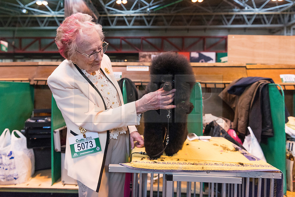 © Licensed to London News Pictures. 10/03/2016. A dog owner grooms her Toy Poodle in the dog benches area before a judging competition. Crufts celebrates its 12th anniversary as the Worlds largest dog show. Birmingham, UK. Photo credit: Ray Tang/LNP