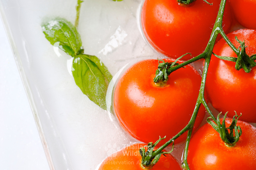 Tomato and basil arranged in a block of ice and lit from the back showing a crisp image with highlights that denotes freshness in frozen foods.