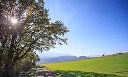 THEMENBILD - herbstlich gefärbter Baum an einem sonnigen Herbsttag, aufgenommen am 22. Oktober 2015, Mils, Österreich // autumnal colored trees with leaves on a sunny Autumn Day, Mils, Austria on 2015/10/22. EXPA Pictures © 2015, PhotoCredit: EXPA/ Jakob Gruber