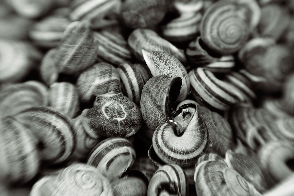 snail shells black and white verticle