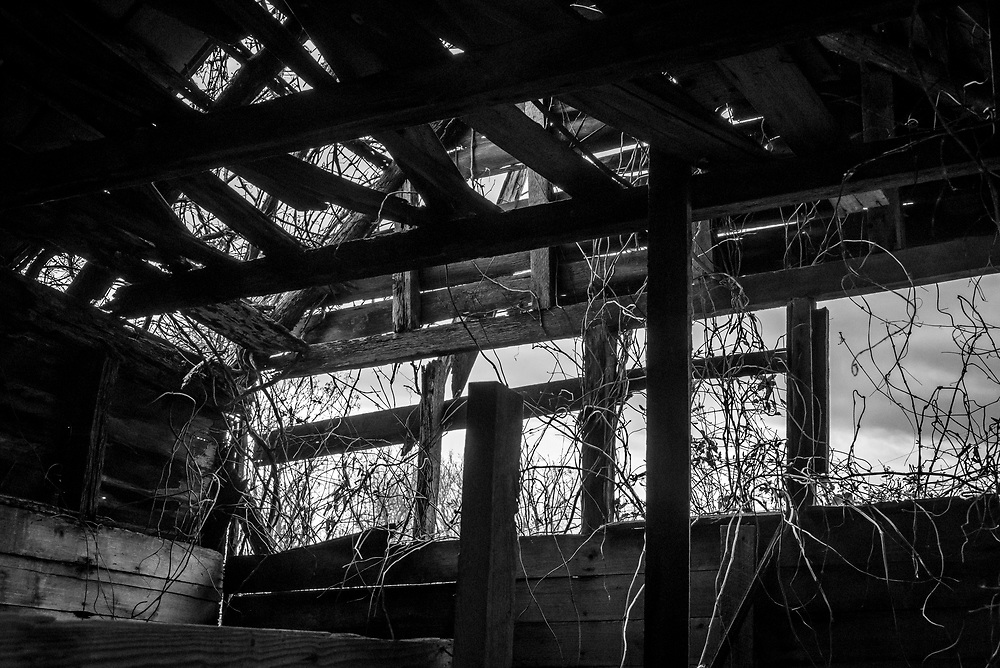 Inside looking out view of an abandoned shed at Willard Dairy Farm in High Point, North Carolina.