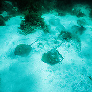 I came across this large gathering of stingrays when I was snorkelling in a bay when I was returning to Loreto. I haven't encountered any stingrays anywhere since.