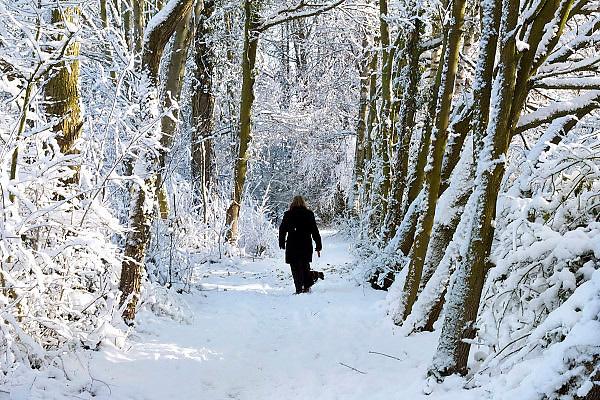 Nederland, Ubbergen, 8-12-2012Een vrouw wandelt door het besneeuwde en witte bos met haar hondje.Foto: Flip Franssen/Hollandse Hoogte