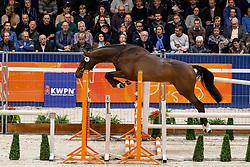 081, Lambourgini<br /> KWPN Hengstenkeuring - 's Hertogenbosch 2019<br /> © Hippo Foto - Dirk Caremans<br /> 31/01/2019