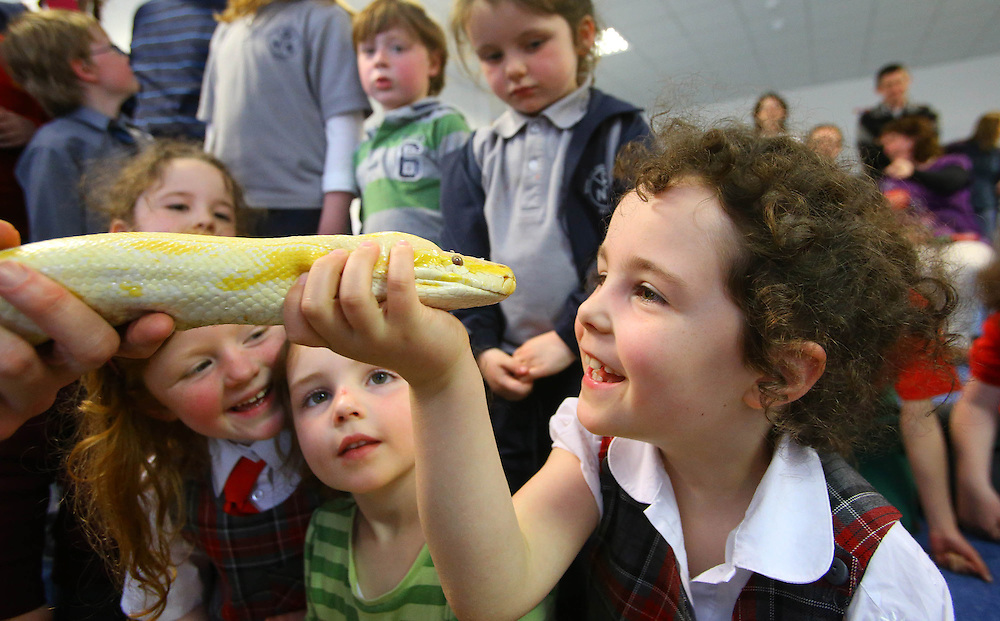 "23/05/2013. FREE TO USE IMAGE.. Pictured at WIT (Waterford Institute of Technology) during the ""Daves Jungle"" show is Meadhbh Ní Fhoghlú from Waterford with a Burmese Python. The show is part of The Bealtaine festival of outdoor science to celebrate the living earth organised by Calmast WIT (Waterford Institute of Technology). Photo Patrick Browne"