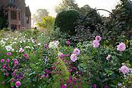 "Dahlia 'Karma Prospero', Dahlia Stolze von Berlin"", Cosmos and Cleome in a border at Chenies Manor House, Chenies, Rickmansworth, Buckinghamshire, UK"