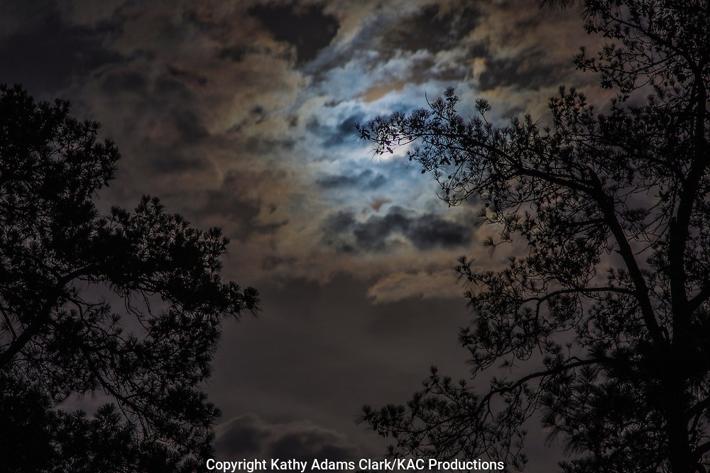 Full moon rising in partly cloudy blue, twilight sky seen through trees in The Woodlands, Texas.
