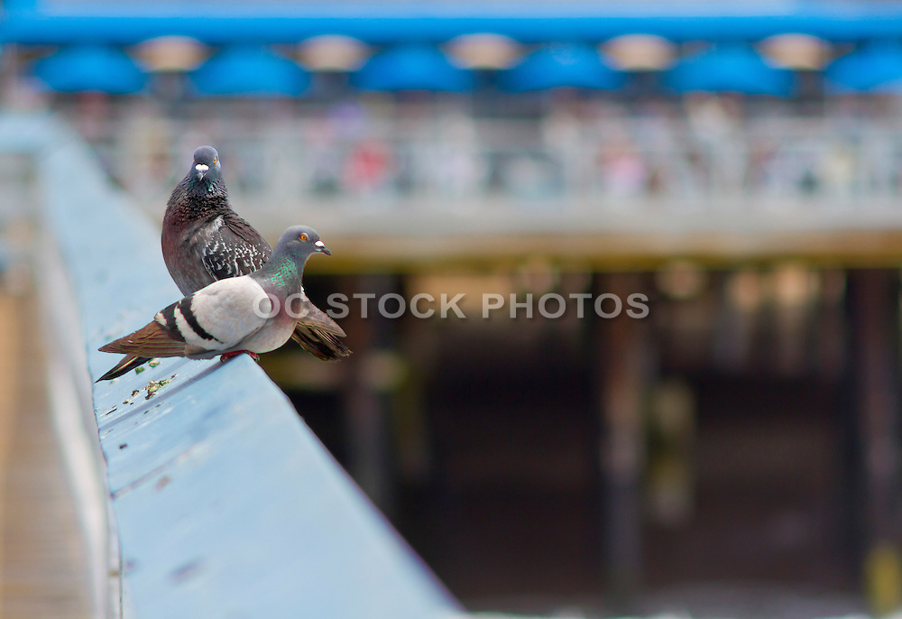 Pigeons Resting on the Pier in San Clemente