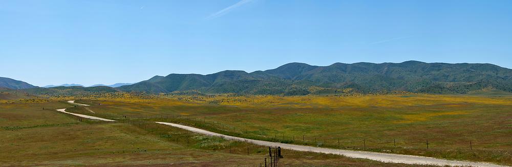 Northern CA Wildflowers (52709 x 17260 pixels)