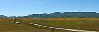 Northern CA Wildflowers (52709 x 17260 pixels)