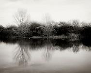 Trees reflect in a pond - Riparian Preserve, Gilbert, AZ