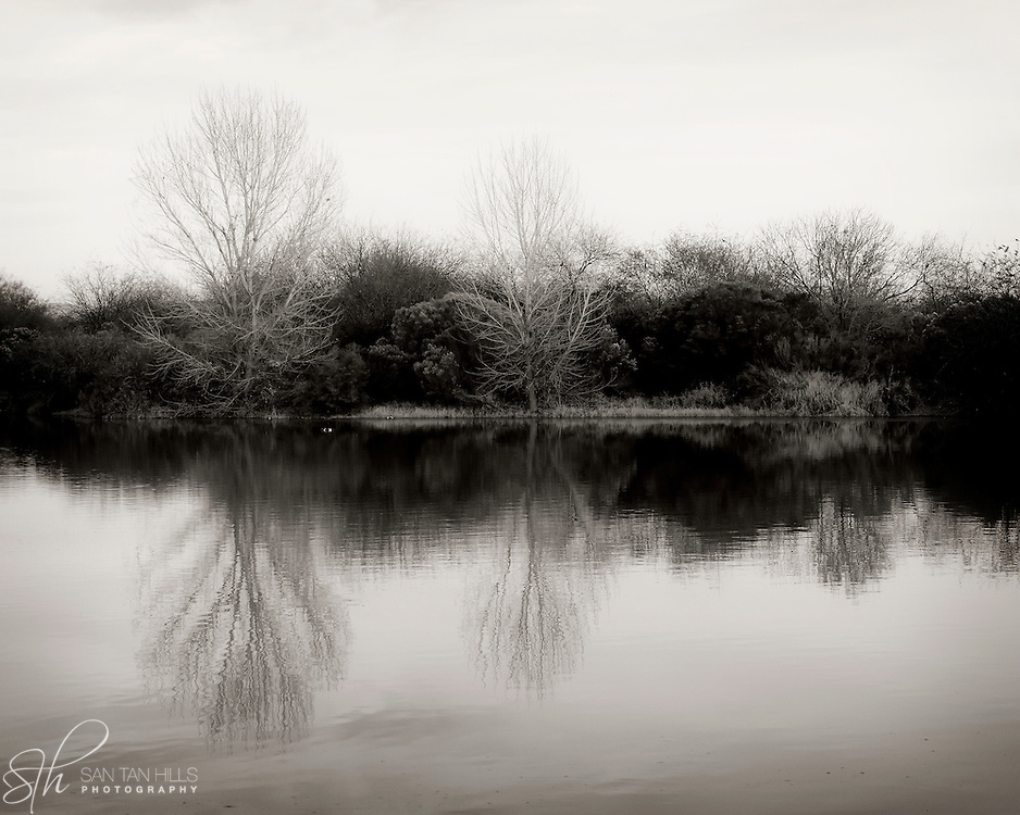 Trees reflect in a pond - Riparian Preserve, Gilbert, AZ
