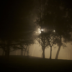 Trees in a suburban park on a foggy night. Irvine, CA.
