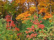 Fall's Myriad