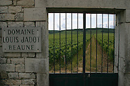 Domaine Louis Jadot vineyards, Beaune France.