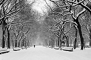 Central Park, New York City, New York, Manhattan, Poets Alley, Snow, Black and White
