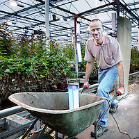 Nederland, Nieuwaal , 1 september 2009..Chief Technology Officer.Arne Aiking demonstreert Clean Light in een Bloemenkas..Clean Light is het bedrijf dat de UV-gewasbeschermings-techniek heeft uitgevonden, gepatenteerd en praktijkrijp gemaakt..UV-gewasbescherming is een innovatieve techniek die het mogelijk maakt om schimmels, bacteriën en virussen te bestrijden op veel belangrijke landbouwgewassen, zonder chemicaliën. De kosten besparingen voor de producent alsmede de volksgezondheidsvoordelen voor de consument spreken voor zich..Clean Light is the company that has invented, patented the UV-plant protection technology and made it ready for use..UV plant is an innovative technique that allows fungi, bacteria and viruses to fight on many important agricultural crops without chemicals.