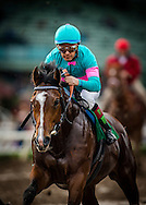 ARCADIA, CA - JANUARY 07: Gormley #5, ridden by Victor Espinoza wins the Sham Stakes at Santa Anita Park on January 7, 2017 in Arcadia, California. (Photo by Alex Evers/Eclipse Sportswire/Getty Images)