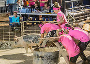2017 Pig Wrestling