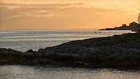 Paddlers race towards the sunset in the Harbour of Victoria, BC as a frieghter is seen in the far distance.