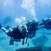 Scuba divers at Lady Elliot Island