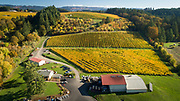 Aerial view over Goldenn fall colors at Patricia Green Cellars estate vineyard, Ribbon Ridge AVA, Willamette Valley, Oregon