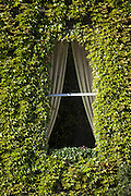 Windows on ivy covered building.