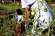 MILES TAMBOLI of Memphis, teaches inner city girls from Girl's Inc. how to farm, grow and sell organic produce on some farm land in Frayser, Tennessee.