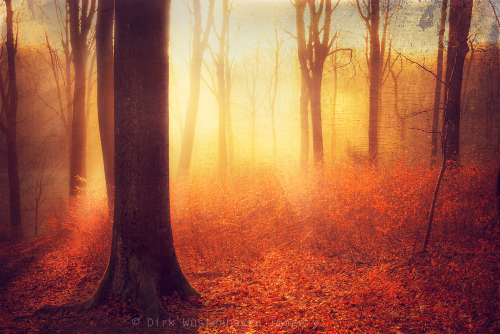 Texturized photograph of a sunrise in a beech tree forest.<br />